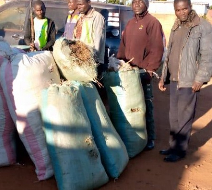 Malawi Police Seize 25 Bags Of Chamba, Five Arrested